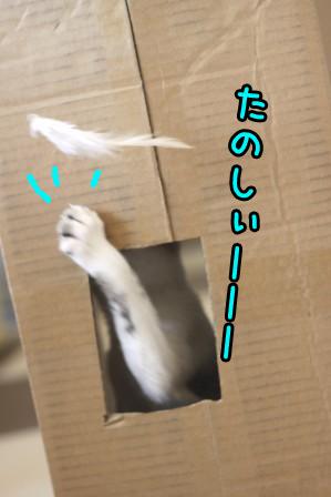 ムギ20120131