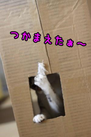 ムギ20120131-3