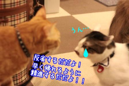 ひげごろう20120212