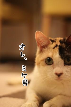ミケ男20120217-2