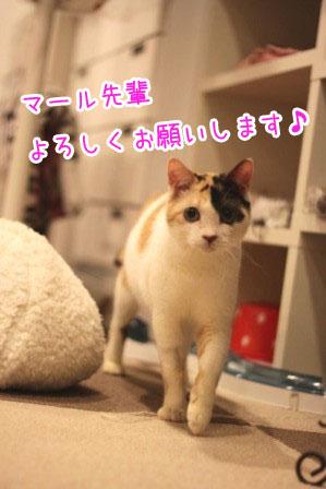 ミケ男20120217-3
