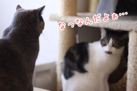 ひげごろう20120223-2