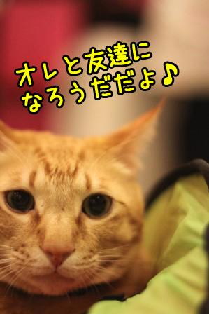 ちゃんぷ20120312