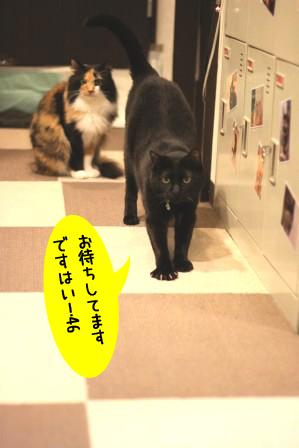 しろう店長20120311