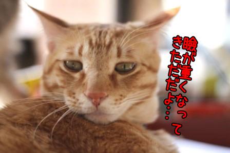 ちゃんぷ20120321
