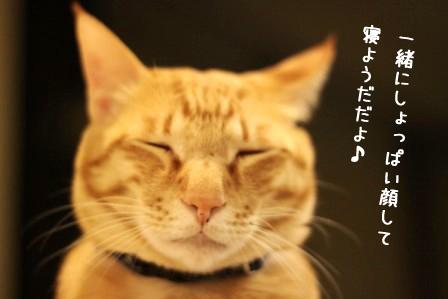 ちゃんぷ20120401