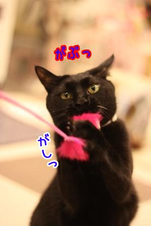 しろう店長20120411-4