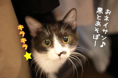 黒丸20120412-4