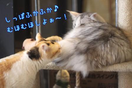ミケヲ20120503-4