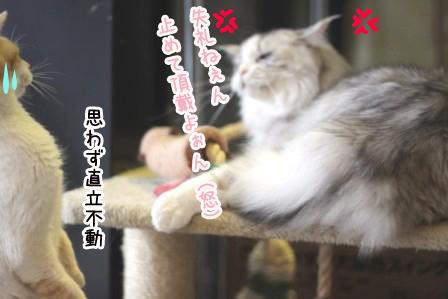 ミケヲ20120503-5