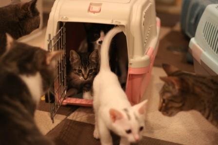 チビ猫ファイブ20120509-2