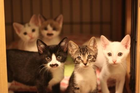 チビ猫ファイブ20120509-3