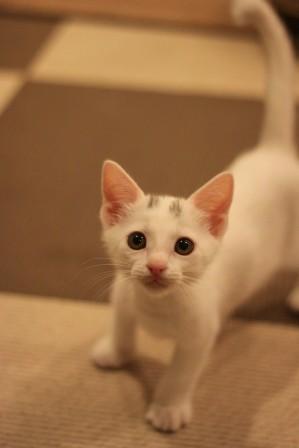 チビ猫ファイブ20120509-5
