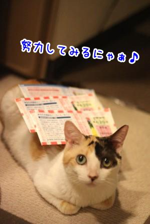 ミケヲ20120601