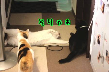 ひげごろう20120604-3