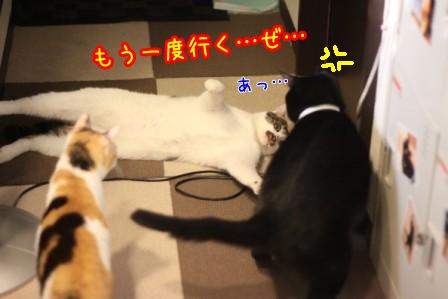 ひげごろう20120604-4
