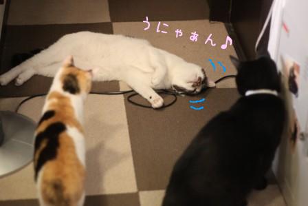 ひげごろう20120604-6