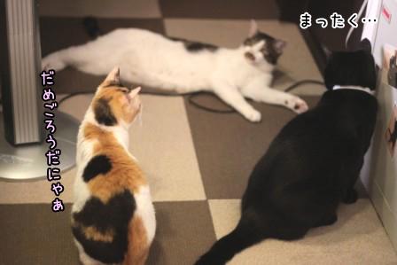 ひげごろう20120604-10