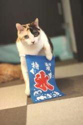 ミケヲ20120614