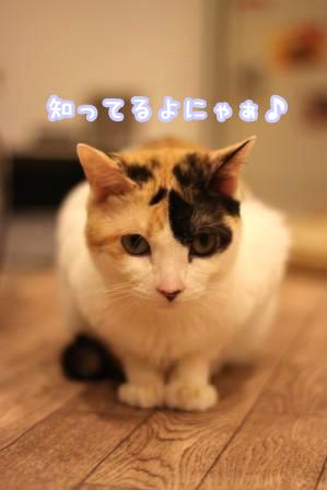 ミケヲ20120625