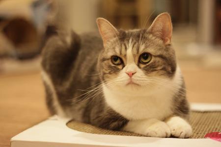どーもぉ♪ 『猫まるカフェ ...