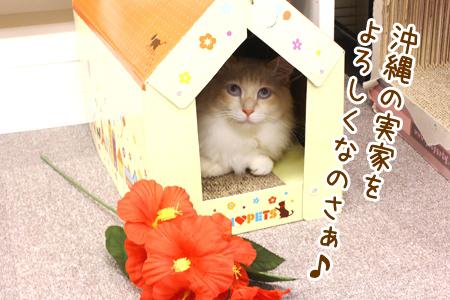 ガム男20120813