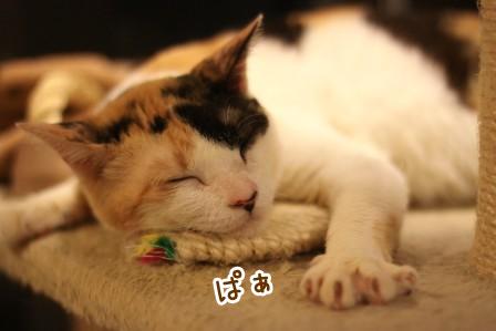 ミケヲ20120814-2