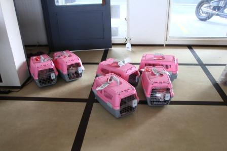 沖縄店到着20120822