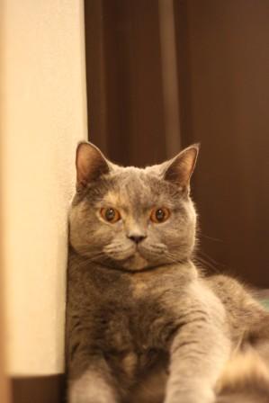 こぶ平20120915