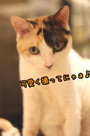 ミケ男20120919