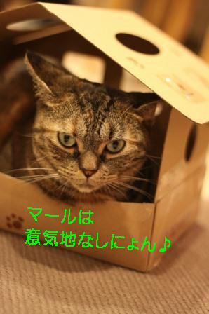いちご20120922