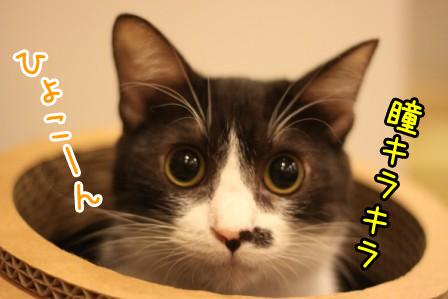 黒丸20120927-3