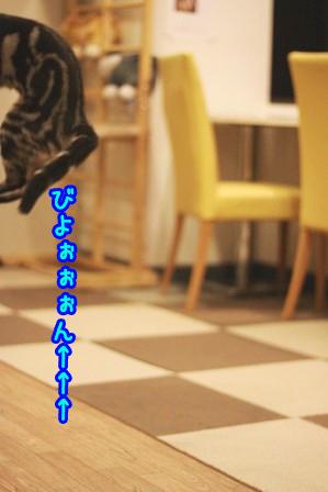 凛太朗20121105-4