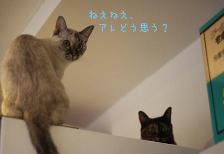 201211ゆきききき