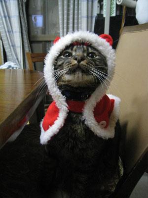 h22クリスマス1