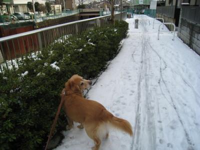 リキー雪3