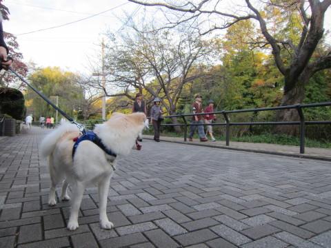 h23,11公園3