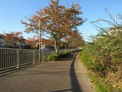 h23,11朝散歩2