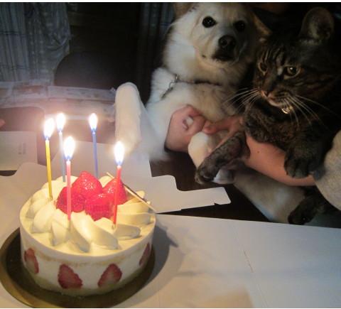 h23,12みゆき誕生日