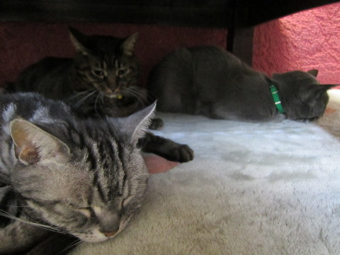 h24,1ホカペと猫