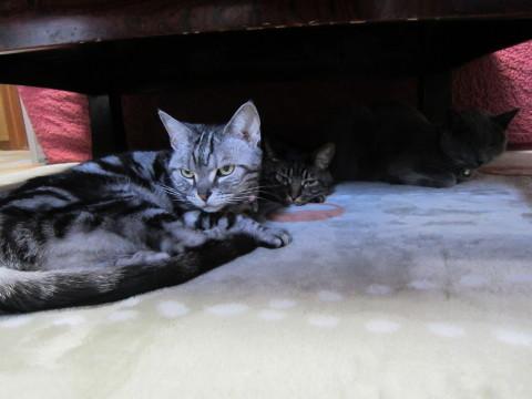 h24,,1ホカペと猫