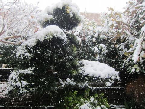 h24,2雪