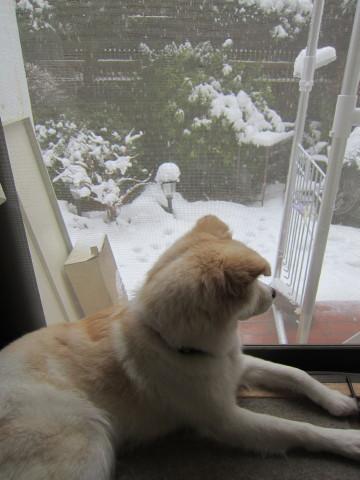 h24,2雪見のアロー