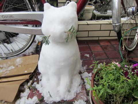 h24,2雪猫