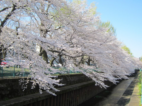 h24,4桜