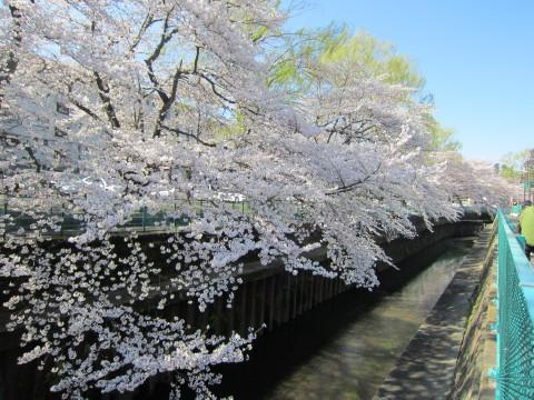 h24,4桜2