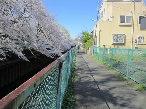 h24,4桜3