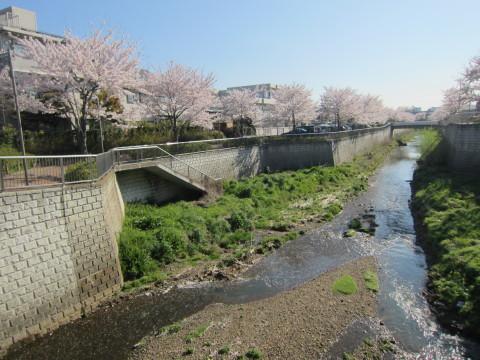 h24,4桜5