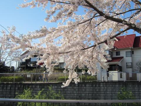 h24,4桜6
