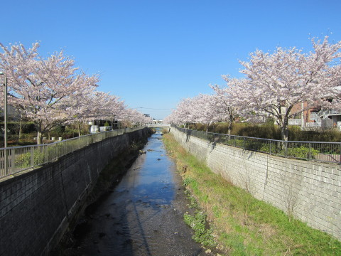h24,4桜7